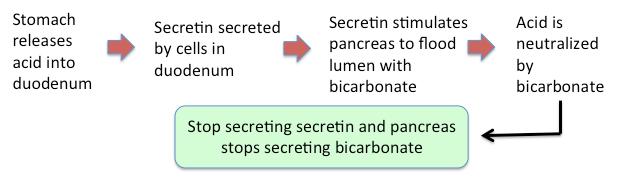 Enteric Endocrine System